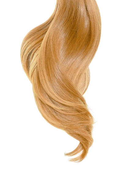 Blond hair on white background Blond ponytail isolated on white highlights hair stock pictures, royalty-free photos & images