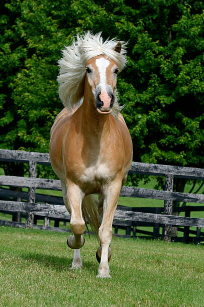 Blond Horse on the Run I call this photo