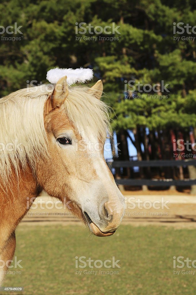 Blond horse wearing angelic halo on farm royalty-free stock photo