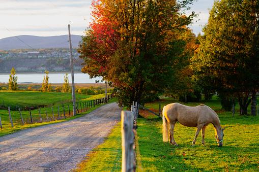 Blonde horse in rural Quebec