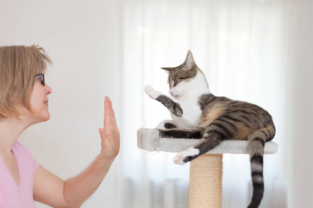 blonde woman and cat gives  high five human and animal gives high five, face to face,  side view animal tricks stock pictures, royalty-free photos & images
