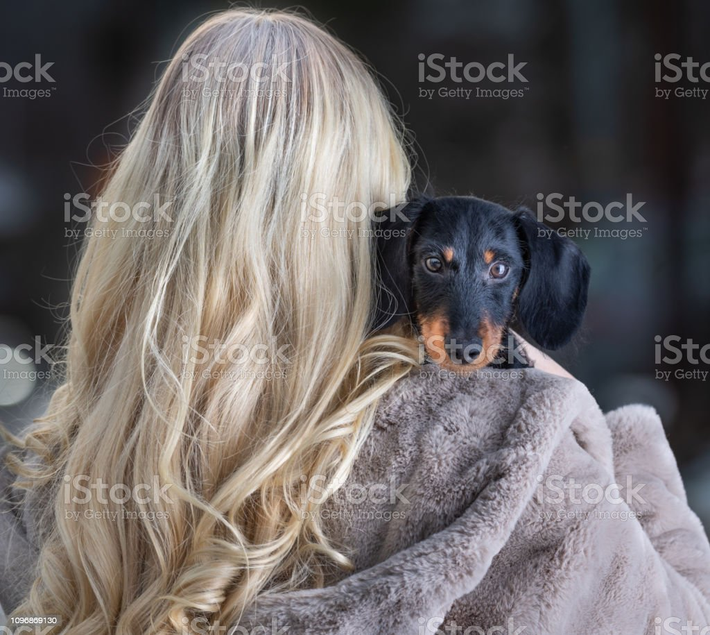 Blonde Young Woman And Her Dachshund Puppy Stock Photo Download Image Now Istock