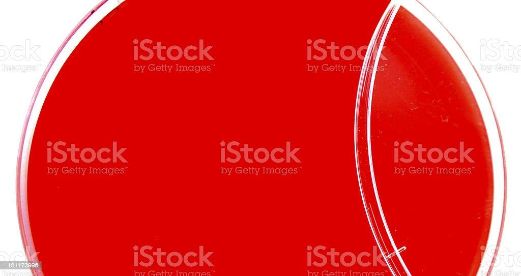 Blood agar plate stock photo