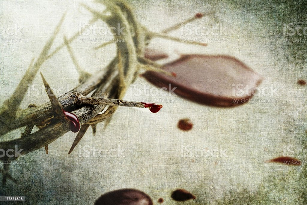 Blood and Thorns stock photo
