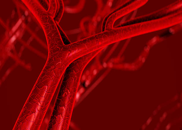 Blood arteries and veins photograph stock photo