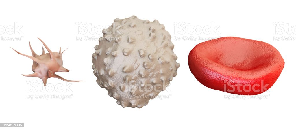 blood cells erythrocyte, lymphocyte, thrombocyte, 3D rendering isolated on white background stock photo