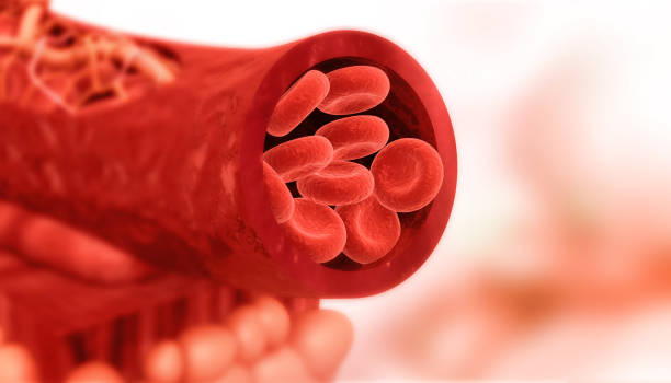 Blood cells in artery stock photo