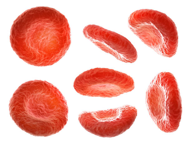 Blood cells in different positions isolated on a white background. 3d illustration Blood cells in different positions isolated on a white background. 3d illustration red blood cell stock pictures, royalty-free photos & images
