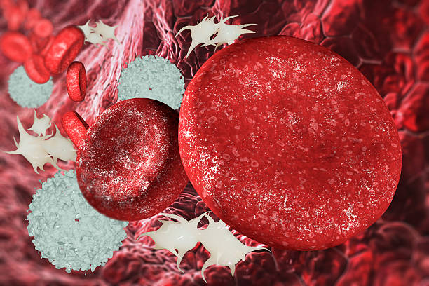 blood cells in the blood vessel stock photo