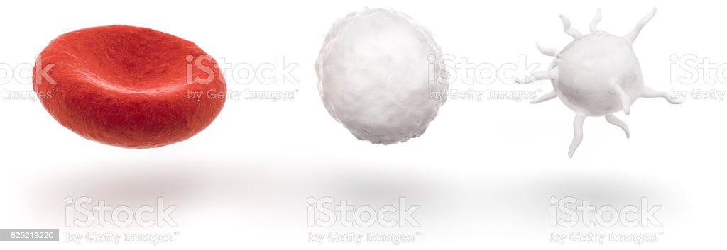 blood cells isolated on white background stock photo