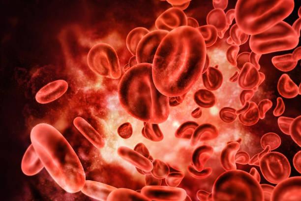 blood cells - ematologia foto e immagini stock