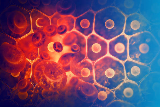 Blood cells Blood cells red blood cell stock pictures, royalty-free photos & images