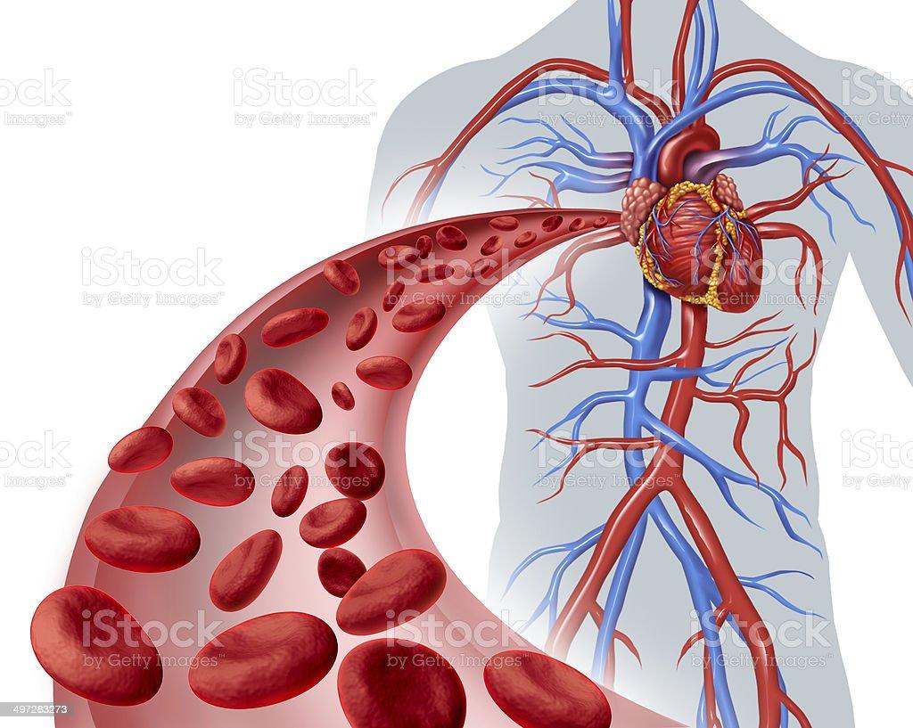 Coração de circulação sanguínea - foto de acervo