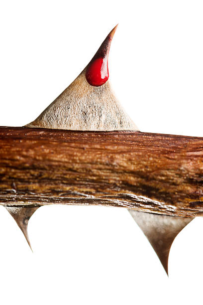 Blood on a Thorn Extreme close up of some blood running down a razor sharp thorn. thorn stock pictures, royalty-free photos & images