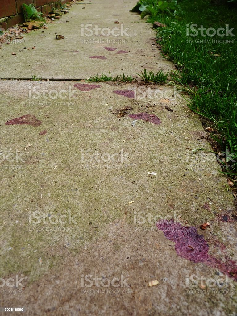 blood on concrete stock photo