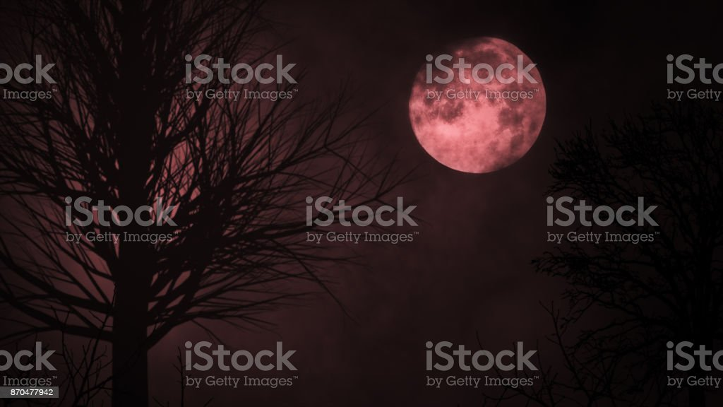 Blood red moon light night sky. spooky trees silhouette. darkness. scary sky. clouds moving realistic 3d illustration stock photo