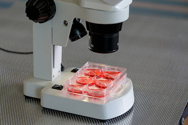 blood test in medical laboratory bench with microscope stock photo