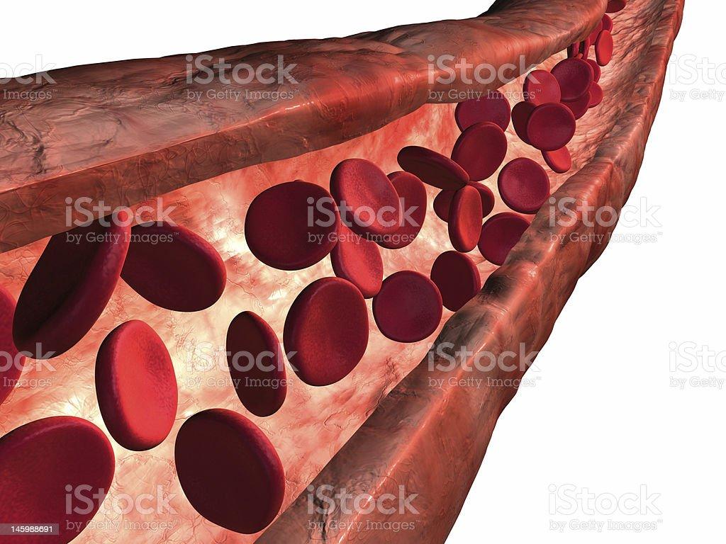 Blood vein royalty-free stock photo