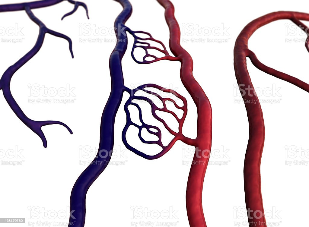blood vessel stock photo