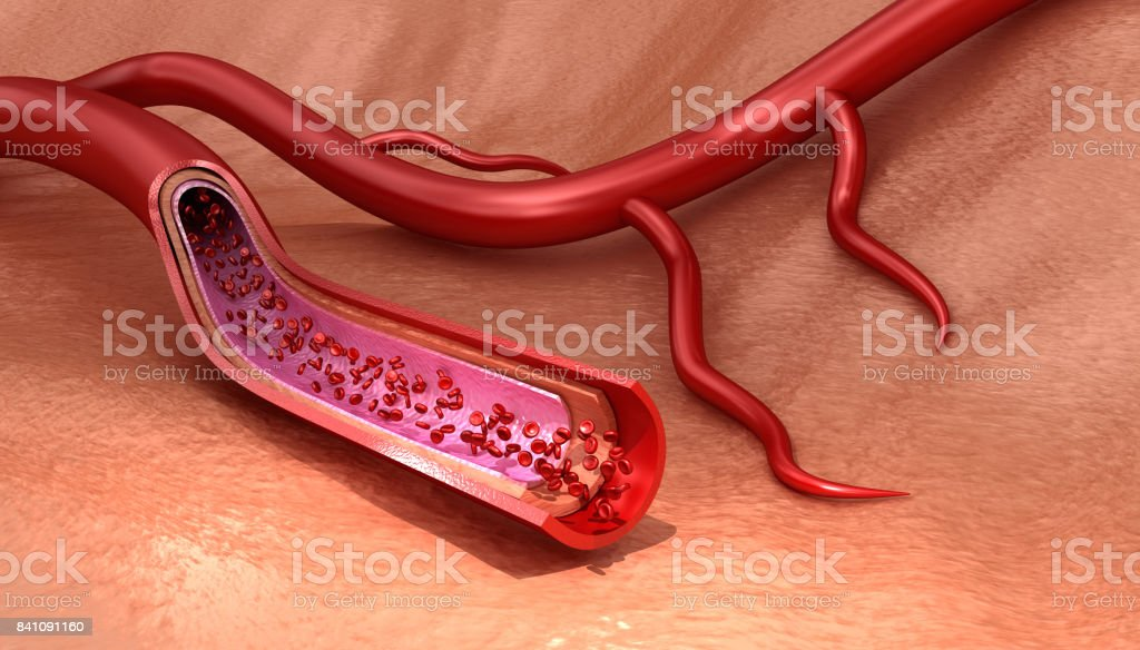 Blood vessel sliced macro with erythrocytes , Medically accurate 3D illustration stock photo