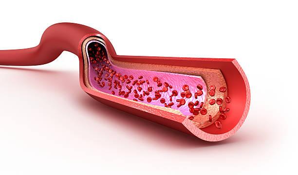 Blood vessel sliced macro with erythrocytes stock photo
