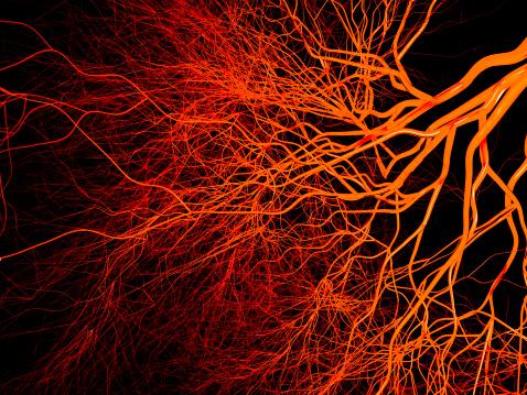 Blood vessels on black background