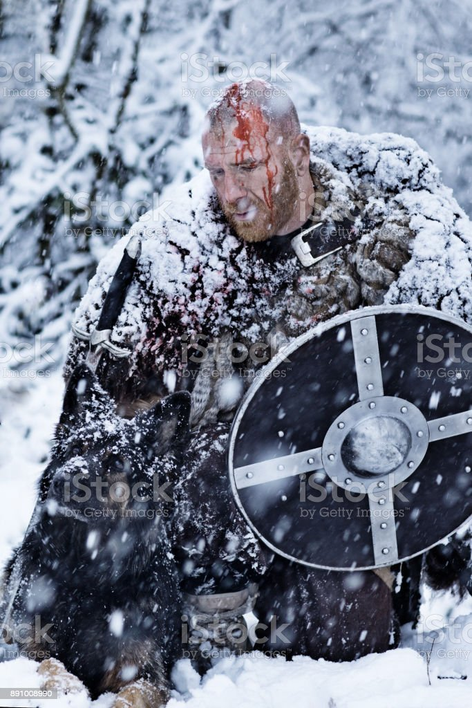 Bloody viking warrior in a winter snowstorm with hunting dogs stock photo