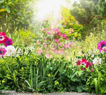 istock Bloom in summer garden with flowers of iris and anemones 500518084