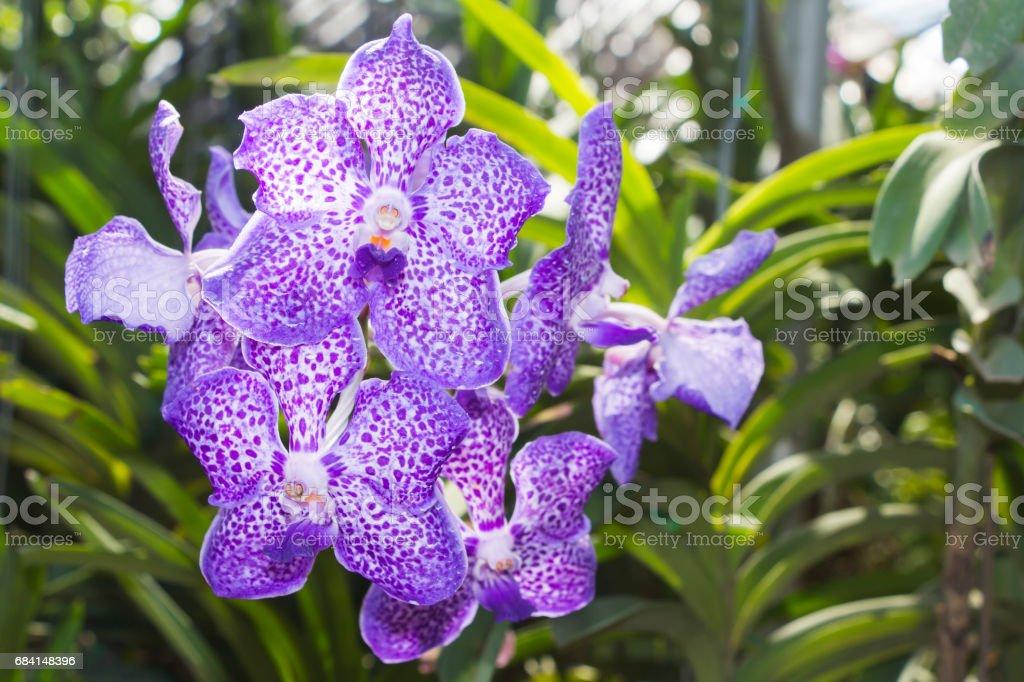 bloom Orchid in garden zbiór zdjęć royalty-free