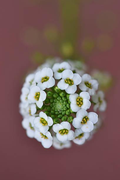 Bloom stock photo