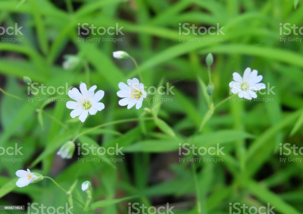 Bloomer Vogelmuur - Royalty-free Beslissingen Stockfoto
