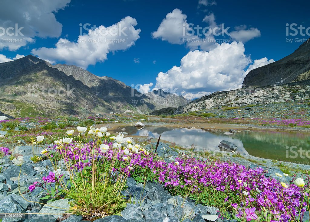 Bloomin of flowers in mountain stock photo