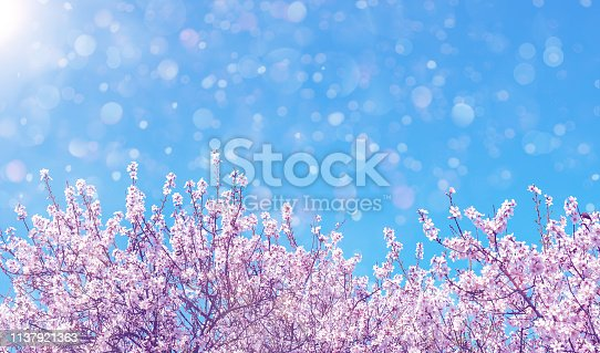 Blooming almond tree over blue sky. Spring nature background