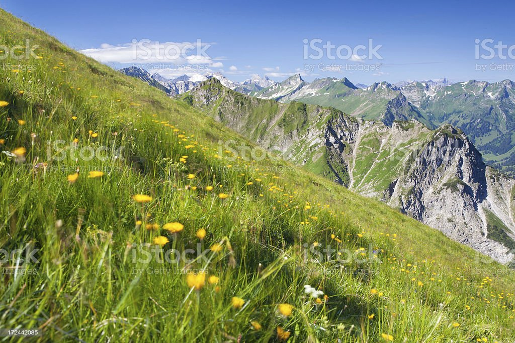 blooming alpine summer meadows, focus on background stock photo