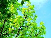 Tree, Springtime, Forest, Summer, Beech Tree