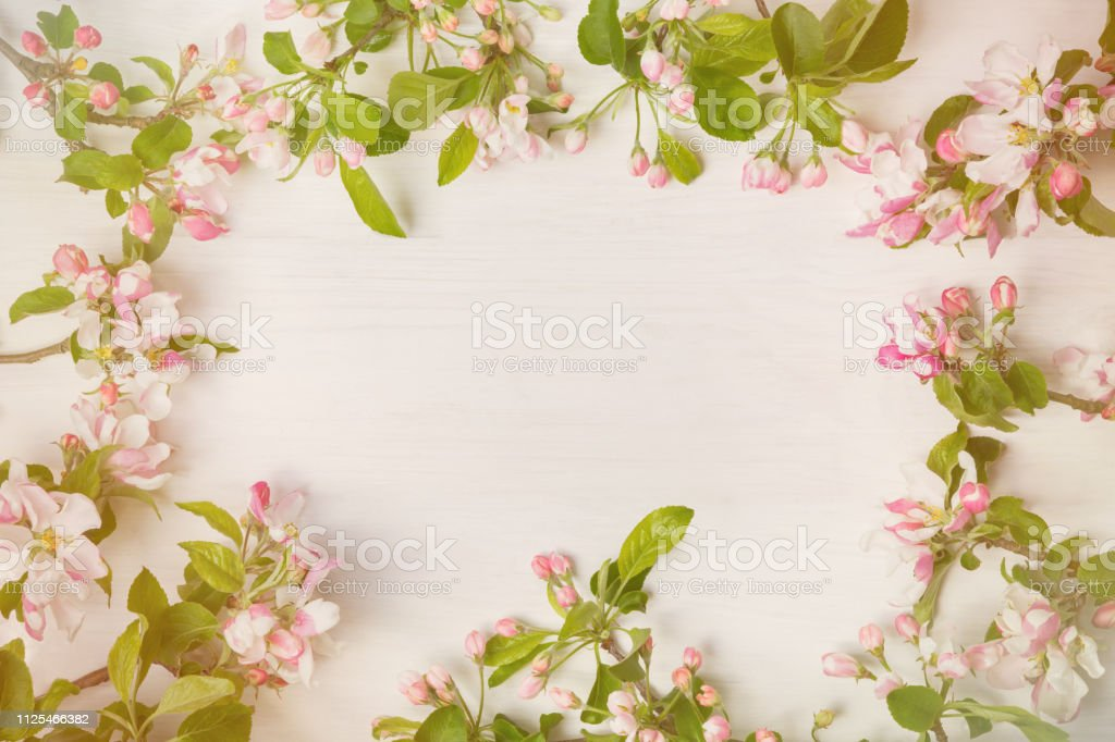 Blooming Apple Tree On White Wooden Background As Frame Idea