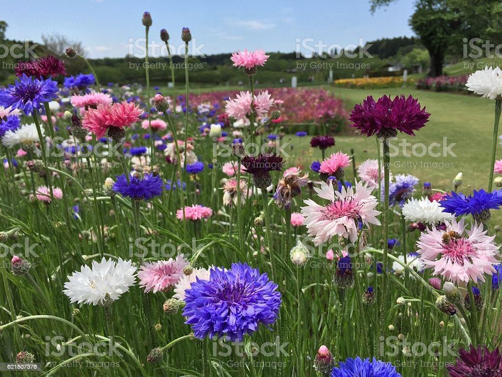 Blooming blooming Lizenzfreies stock-foto