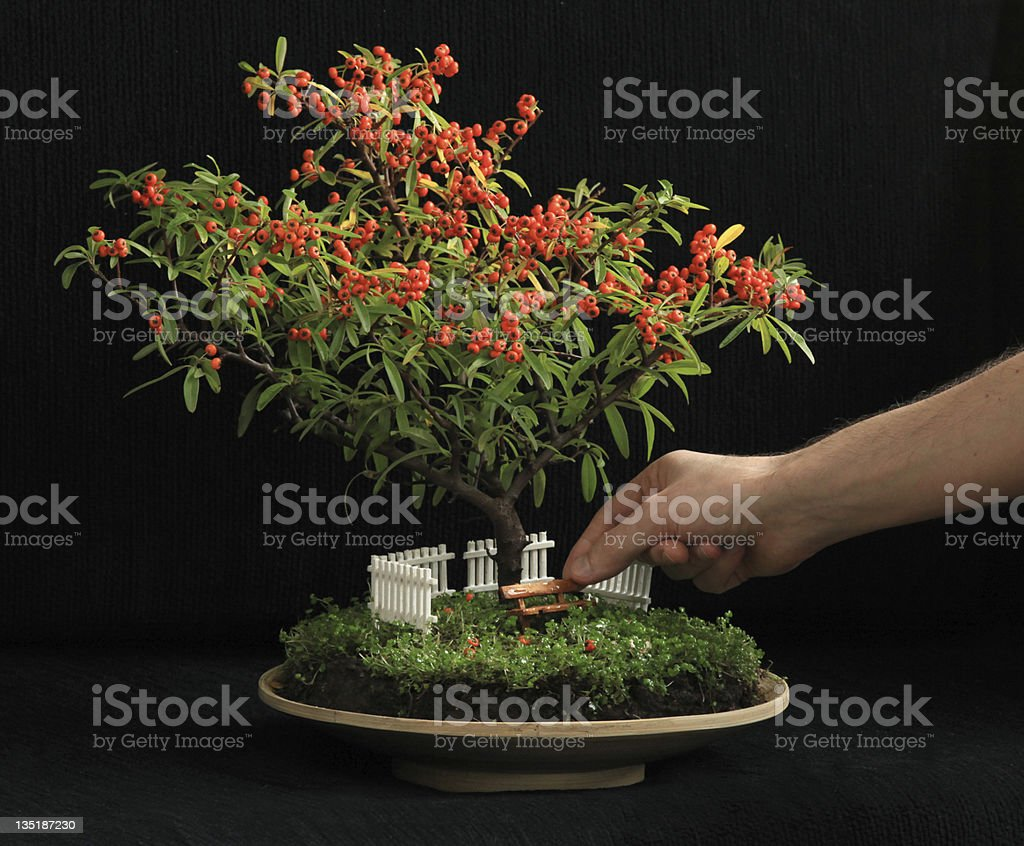 Blooming bonsai tree with miniature garden underneath it royalty-free stock photo