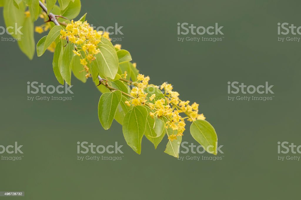 Blooming Branch stock photo