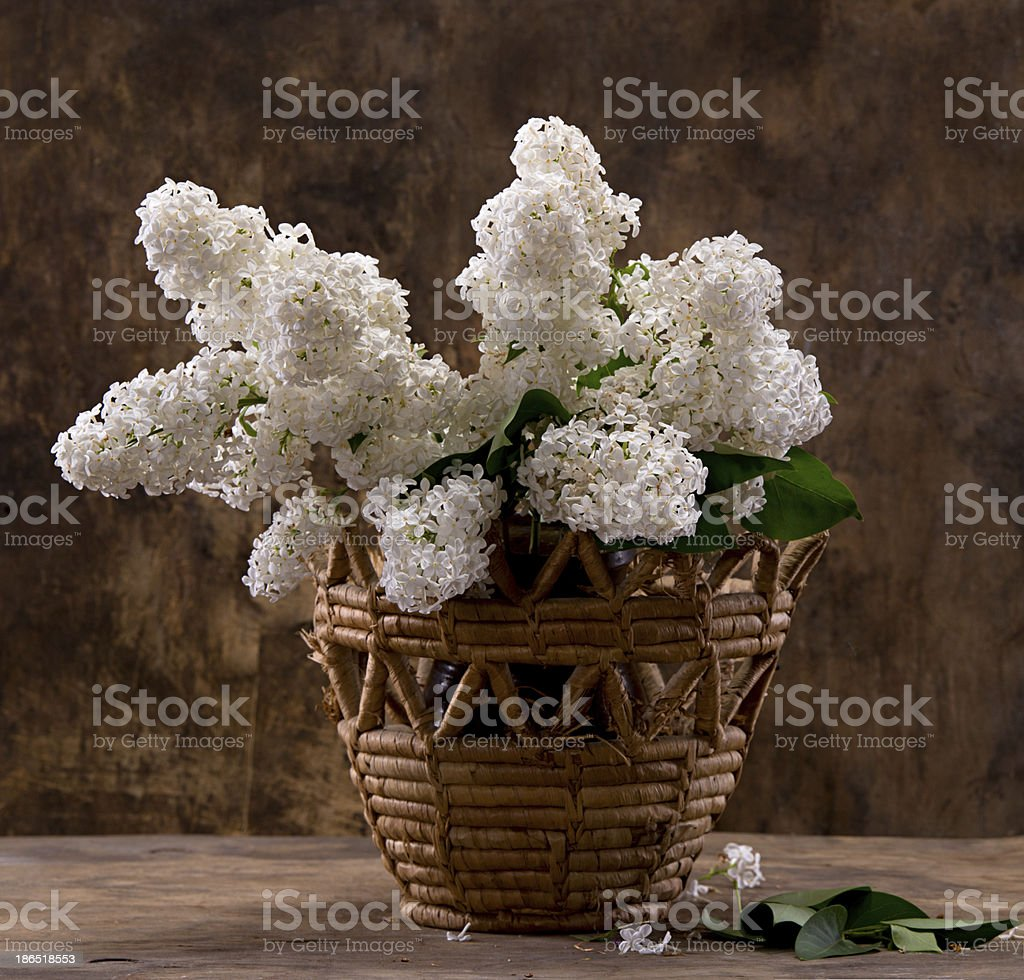 Blooming branches of lilac royalty-free stock photo