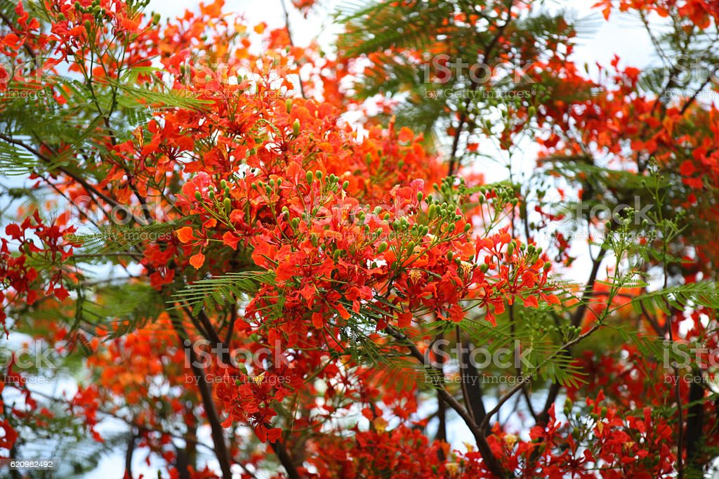 Blooming bright colored flowers, Thailand foto royalty-free