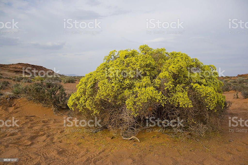 Blooming bush royalty-free stock photo