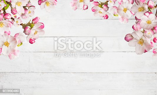 istock Blooming cherry blossoms with old wooden planks 922890480