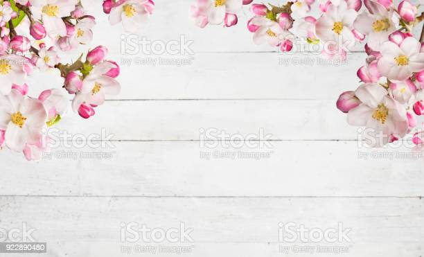Blooming cherry blossoms with old wooden planks picture id922890480?b=1&k=6&m=922890480&s=612x612&h=2nuhgy6ib0kvyg3 m0ts9glamyswmvirkv8cl unnwq=