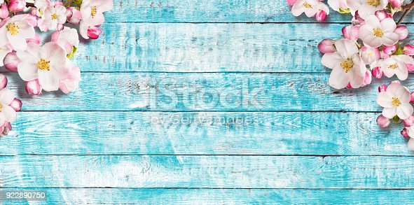 istock Blooming cherry blossoms with old wooden planks. 922890750