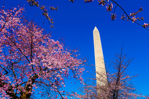 워싱턴 기념비 2에 벚꽃이 피 0명에 대한 스톡 사진 및 기타 이미지