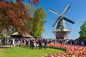 Keukenhof Lisse, The Netherlands - May, 2018: Blooming colorful tulips flowerbed in public flower garden Keukenhof with windmill. Popular tourist site. Lisse, Holland, Netherlands