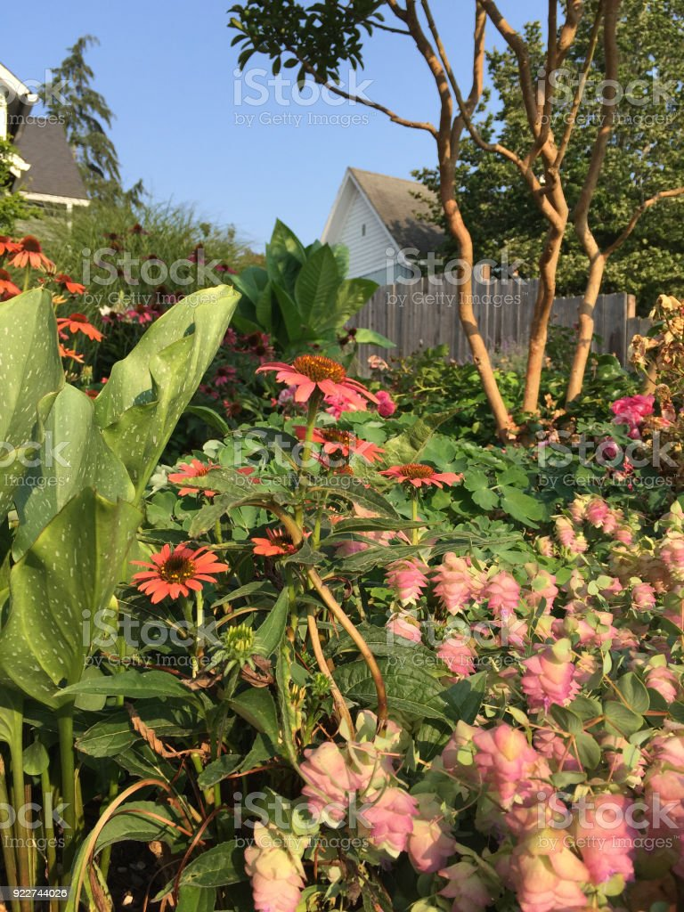 Blooming echinacea, calla lily and other perennial plants in late summer stock photo
