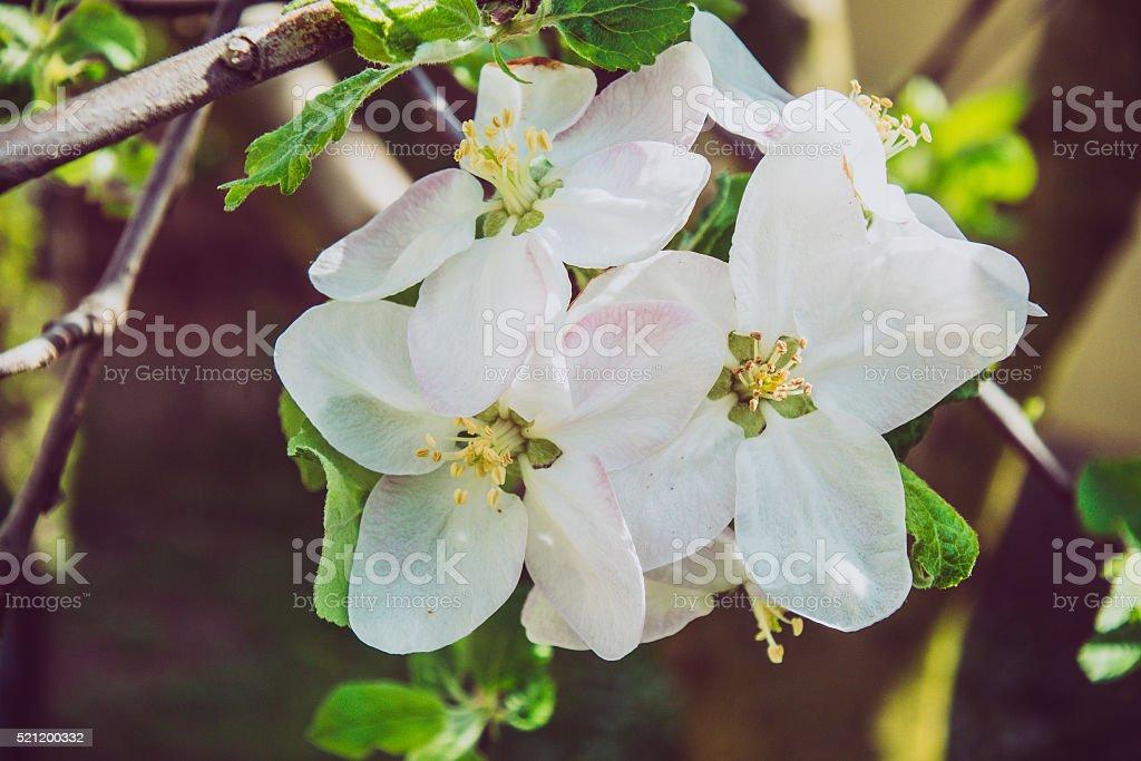 Blooming flower in garden stock photo