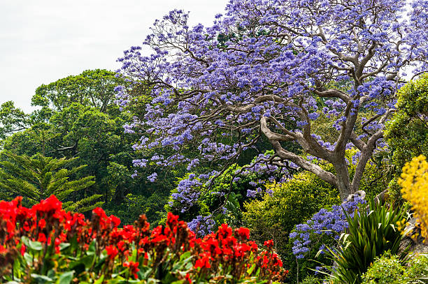Blooming Flower in Royal Botanic Gardens in Sydney, Australia stock photo